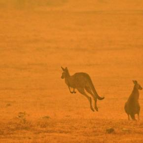 ¿Qué está pasando con los incendios enAustralia?